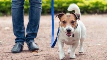 Una persona paseando a su perro
