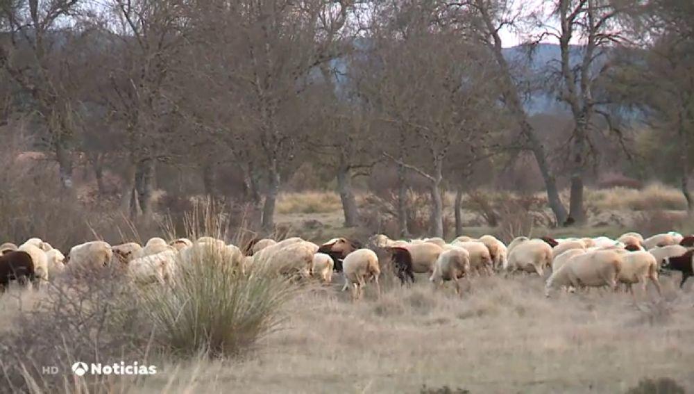 El cambio climático afecta al mundo rural y contribuye a la despoblación en España