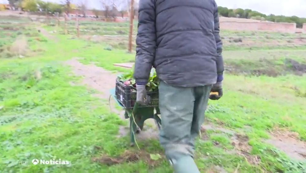 Agricultura ecológica, la solución contra el desempleo de los extranjeros en España