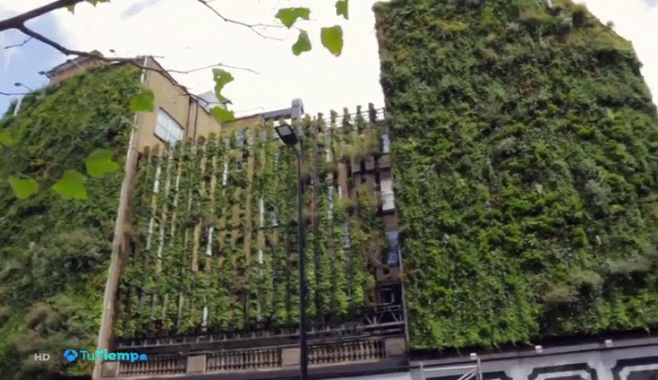 10.000 plantas rodean las paredes de este hotel comprometido con el turismo sostenible