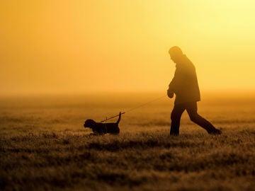 Perro y su dueño