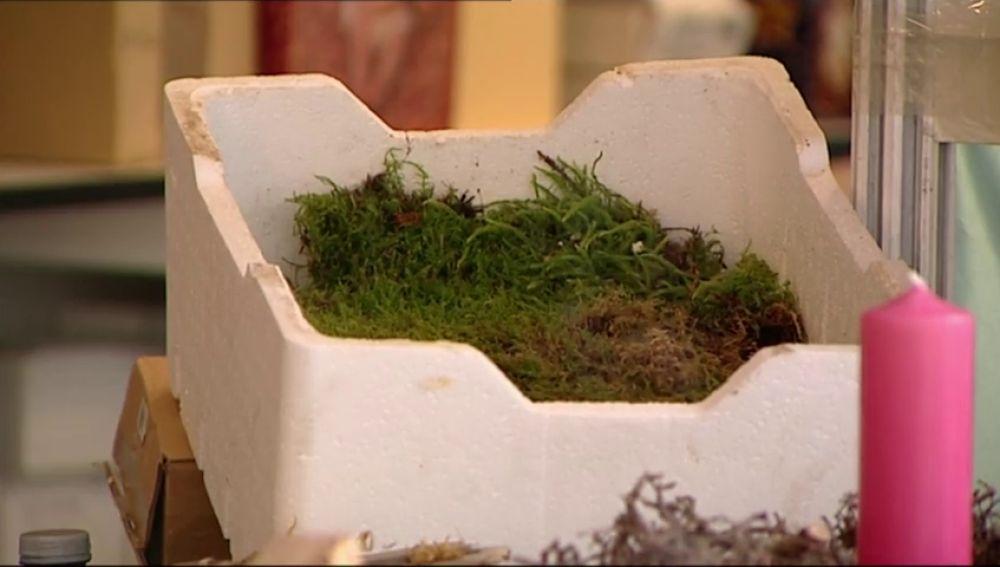 Las autoridades recuerdan que está prohibido coger musgo, tejo o acebo en el campo