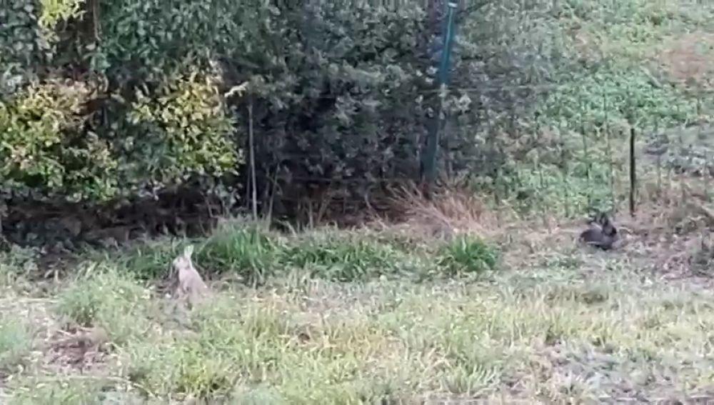 Una plaga de conejos pone en alerta a los vecinos de Portugalete