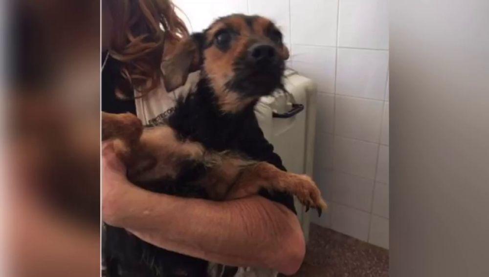 Piden colaboración para dar con la persona que abandonó once perros de unos contenedores de Alicante