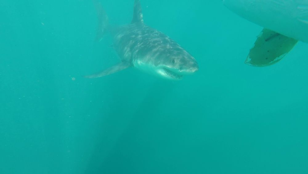 Muere un surfista de 15 años tras ser atacado por un tiburón blanco