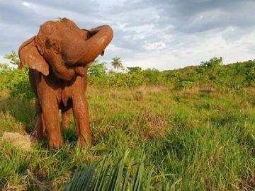 Imagen de Ramba, la elefanta fallecida