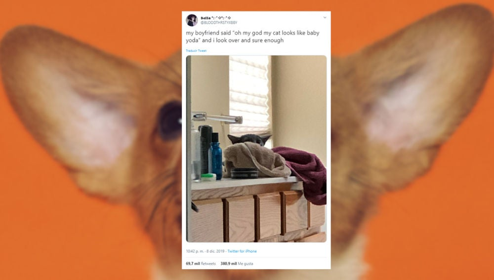 Los mejores tuits sobre perros y gatos