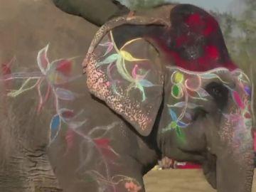 Cinco elefantes protagonistas de un concurso de belleza en Nepal