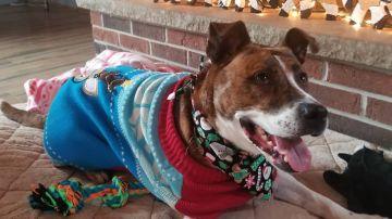 Tras pasar 500 días en un refugio, un perro consigue un hogar justo por Navidad