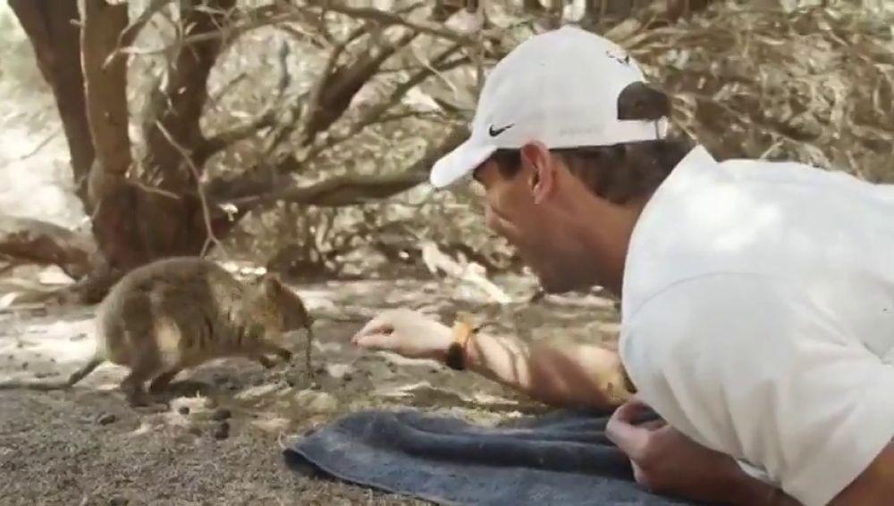 El bonito vídeo de Rafa Nadal con un marsupial que enamora en las redes sociales