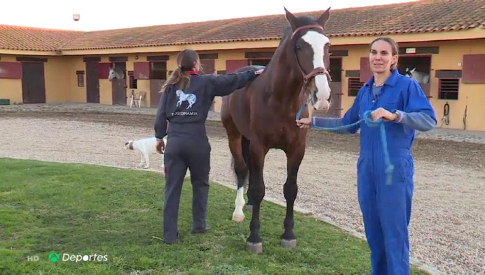 """Los caballos van al fisio: """"Es similar a lo que te pueden hacer a ti"""""""