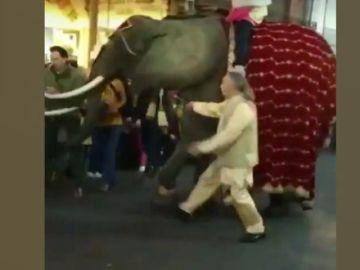 El alcalde de Medina del Campo recibe un susto al recibir un 'trompazo' por un elefante en la cabalgata de Reyes