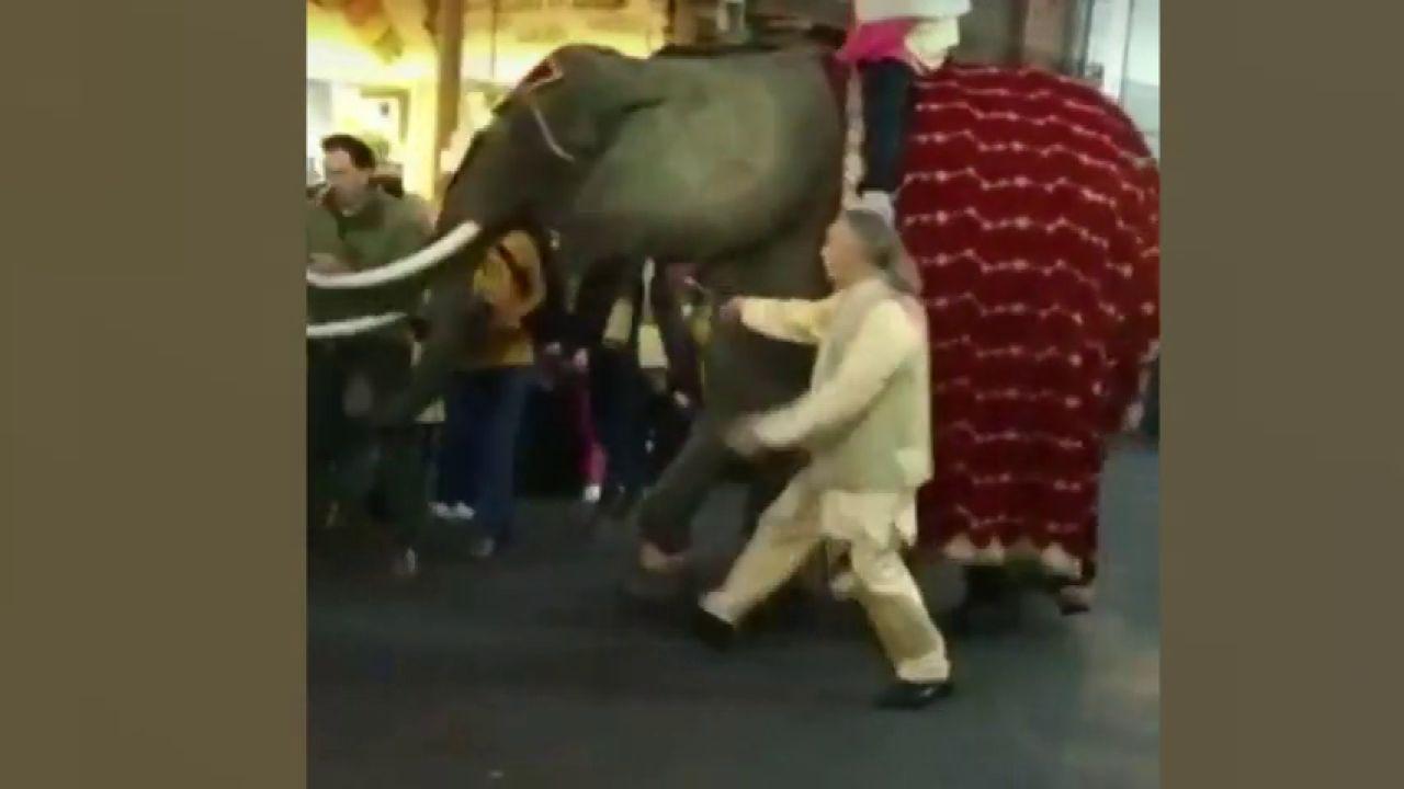 El alcalde de Medina del Campo recibe un trompazo de un elefante en la cabalgata de Reyes