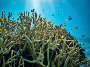 La acidificacion de los oceanos no afecta al comportamiento de los peces