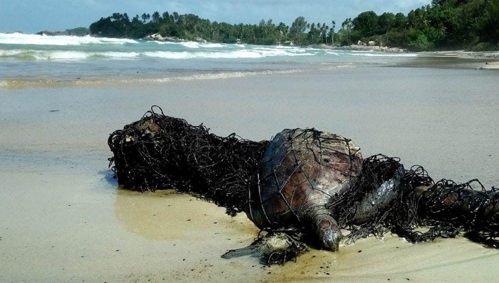 Rescatan a una tortuga de la playa