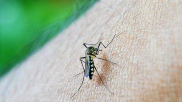 mosquito transmisor malaria