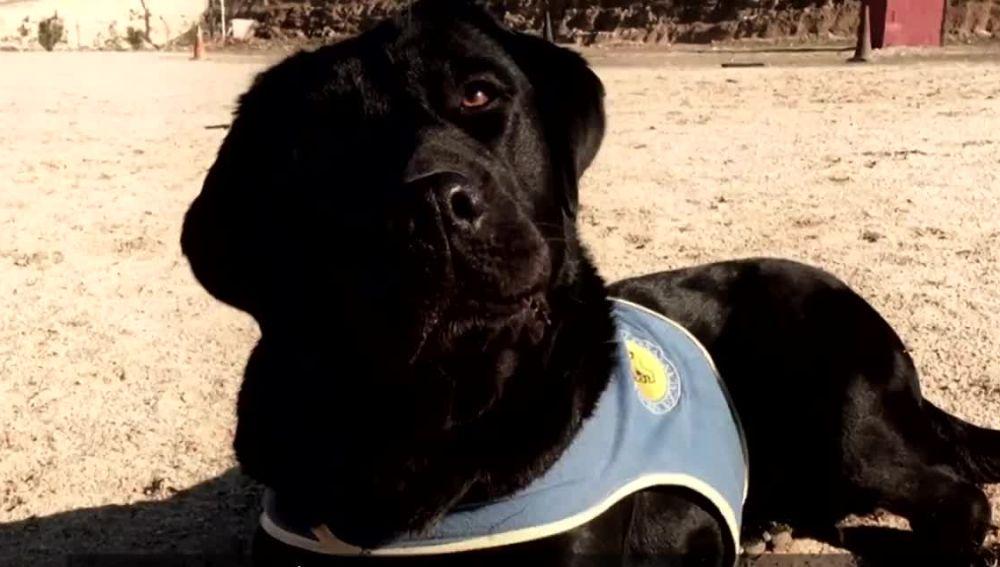Pocahontas, la perra que ha sido robada a punta de pistola