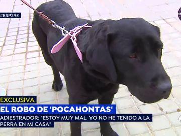 """La perra 'Pocahontas', """"desubicada y nerviosa"""" tras rescatarla de su propio adiestrador"""