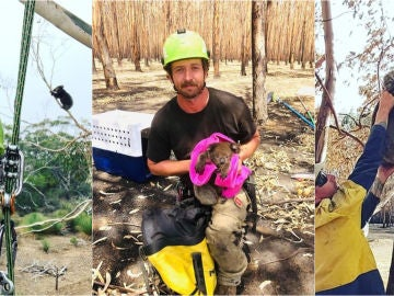 Kailas Wild, en algunos de sus rescates de koalas en Australia