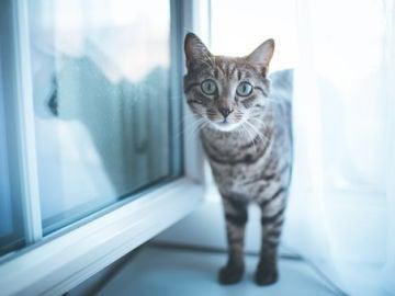 Día del Gato 2020: 5 curiosidades sobre los gatos que no conocías