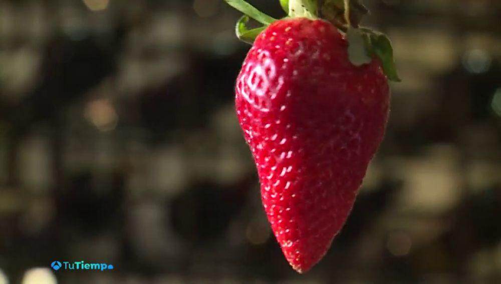 ¿Son los alimentos afrodisíacos eficaces el Día de San Valentín?