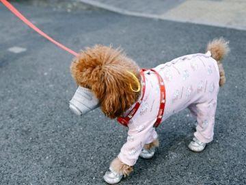 Las mascotas también llevan mascarillas para evitar el coronavirus