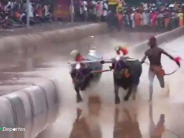Un obrero indio supera el récord de los 100 metros de Usain Bolt corriendo... ¡atado a dos búfalos!