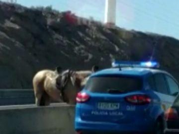 El momento en que un caballo invade la carretera TF-1 de Tenerife y siembra el caos