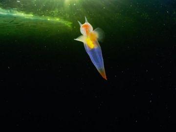 Ángel de mar