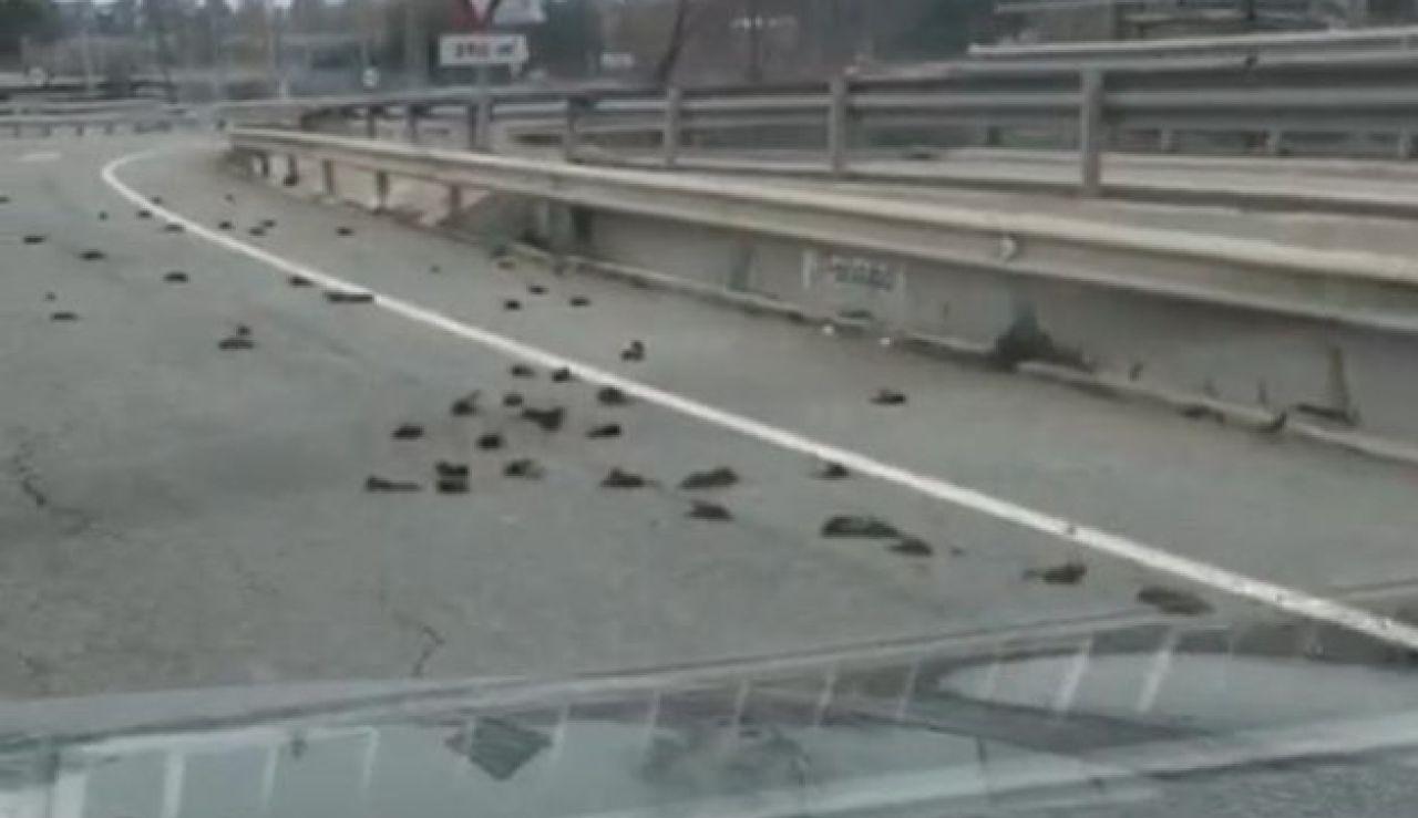 Aparecen cientos de pájaros muertos cerca de la petroquímica de Tarragona
