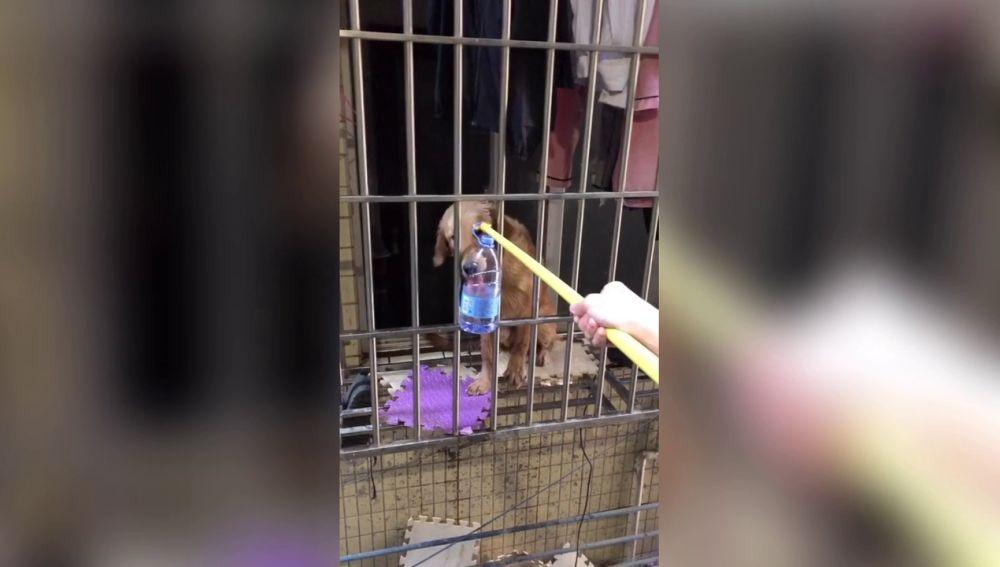 Perro atrapado en China