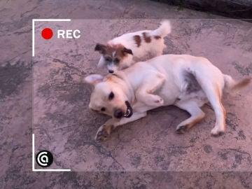 El tierno vídeo de los perritos de Karlos Arguiñano