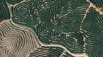 Los campos de Isla Cristina (Huelva).