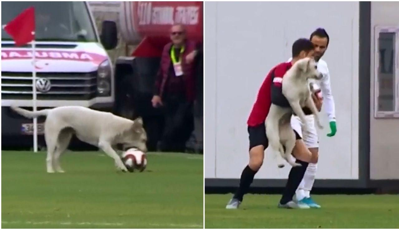 Un perro interrumpe un partido de la segunda división turca