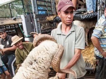 Sacrificio de un carnero en Marruecos