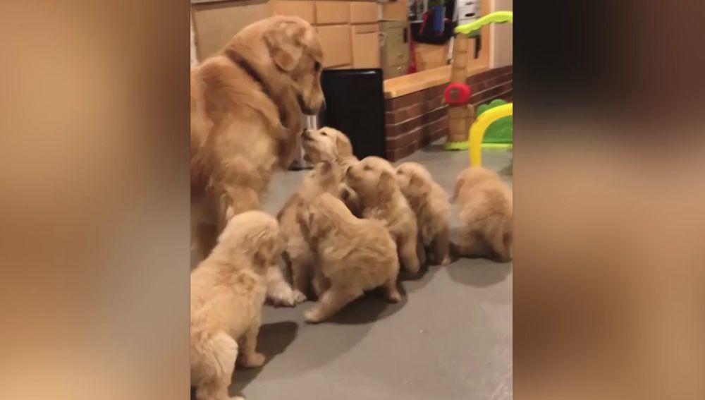 Perro enterrado en cachorros
