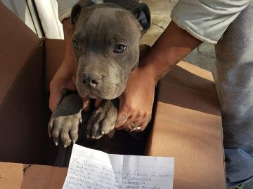 Perro abandonado junto a una carta