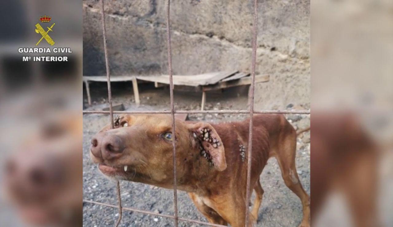 Rescatan a cinco perros moribundos de una cueva de Tabaiba (Tenerife)