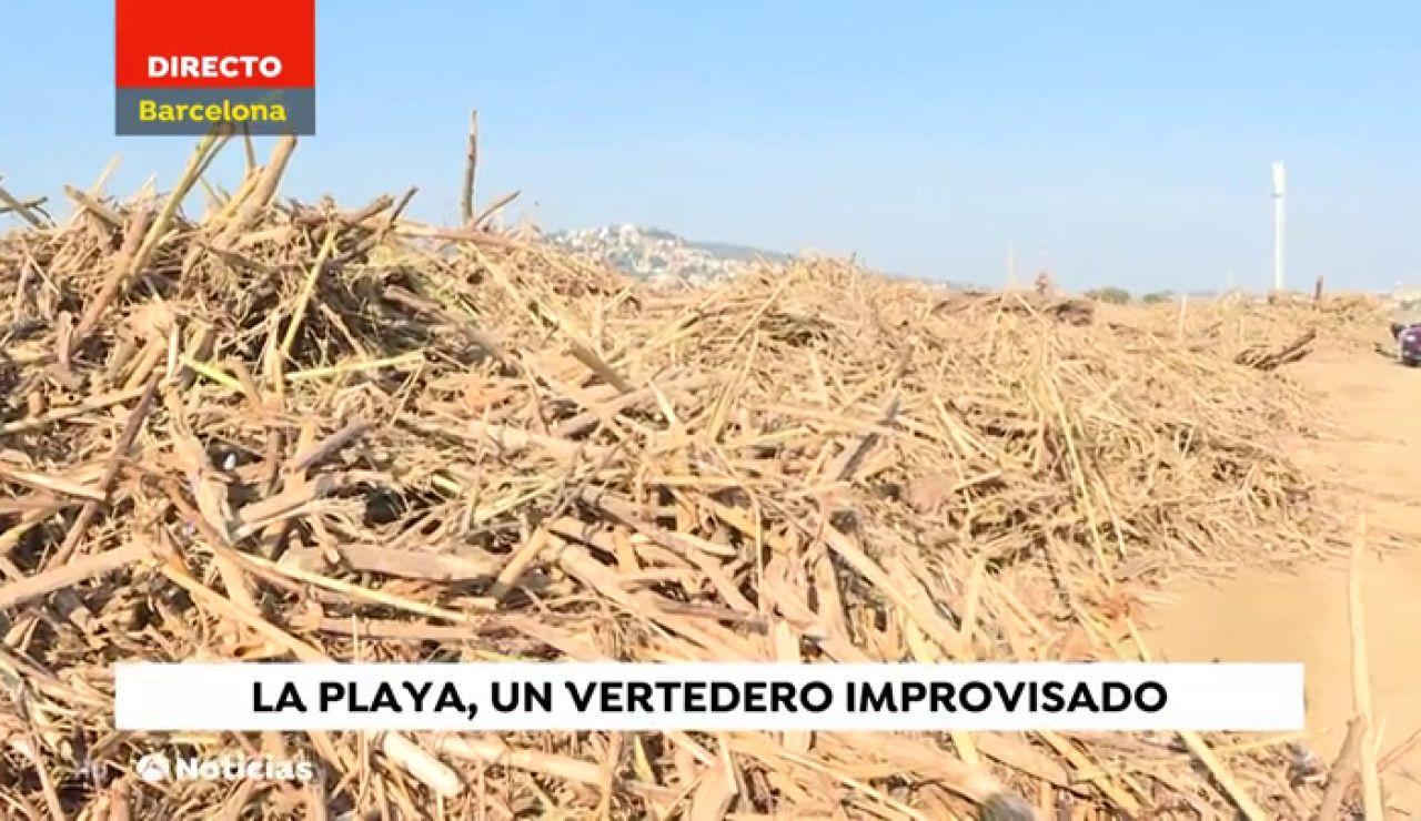 Los estragos de 'Gloria': en la playa de Santa Susana se acumulan toneladas de ramas, cañas y troncos de grandes dimensiones