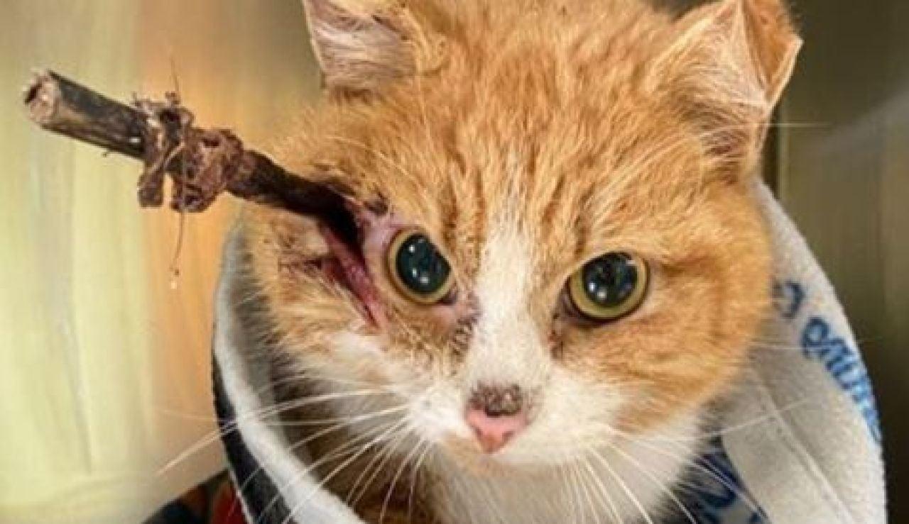 Gato con la flecha clavada