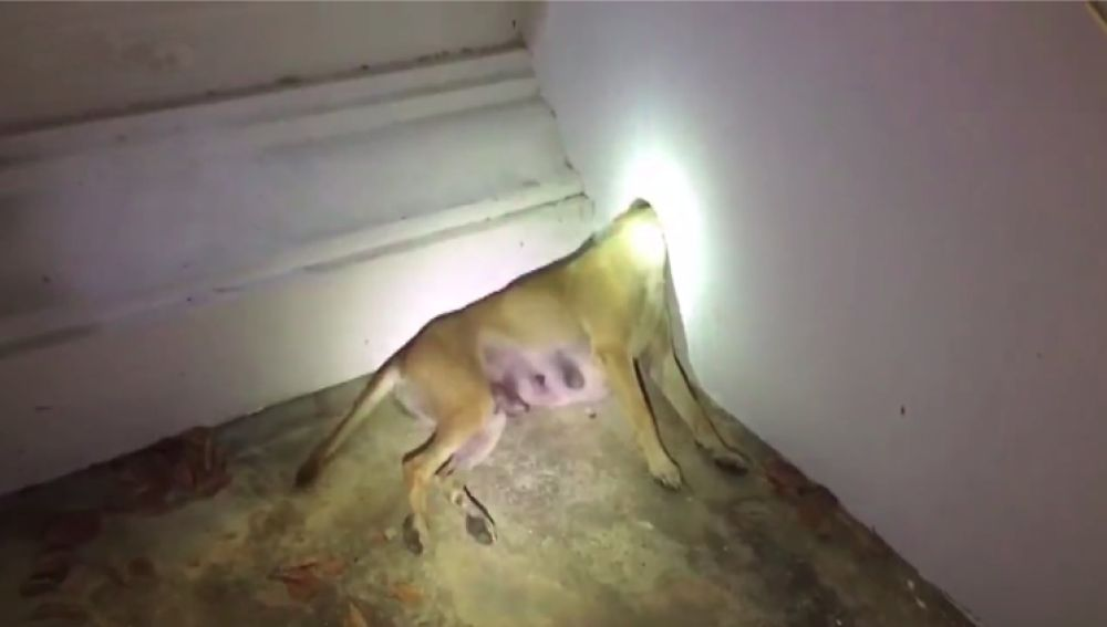 Rescatan a un perro con la cabeza atascada