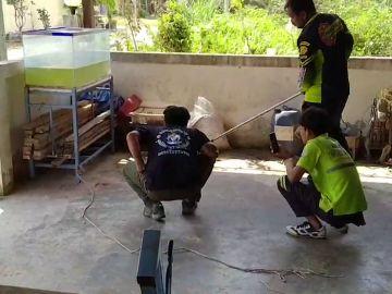Rescatando a una serpiente
