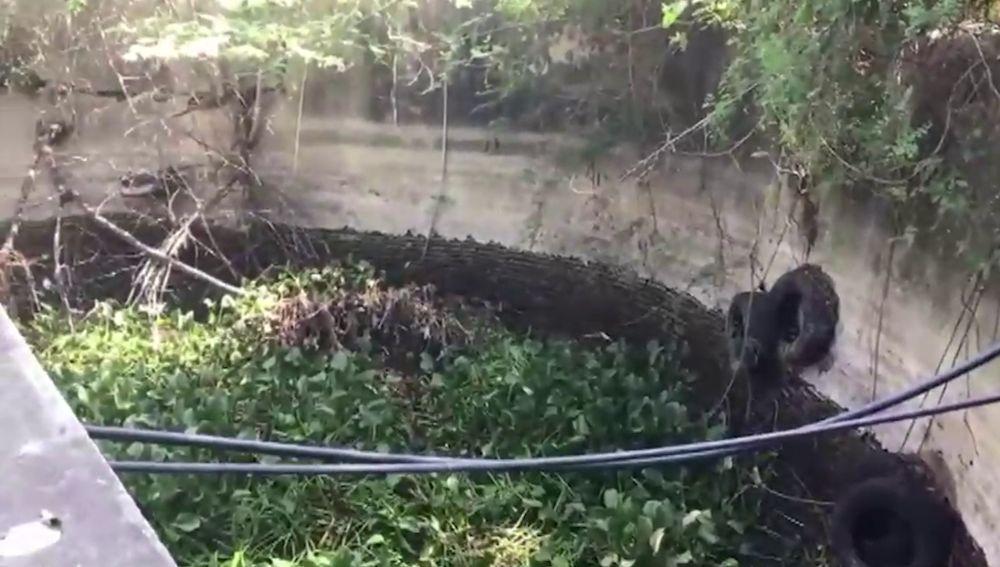 Perro atrapado en un pozo