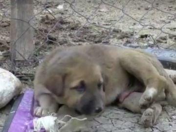 Rescatan a un perro atrapado en un pozo de petróleo en Turquía