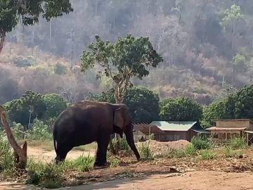 Elefante en Tailandia
