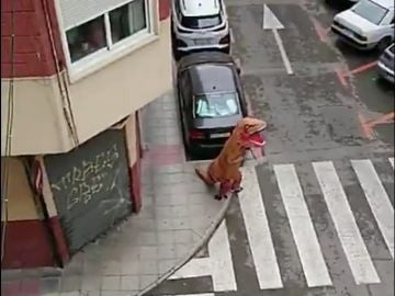 Un hombre disfrazado de dinosaurio en Murcia