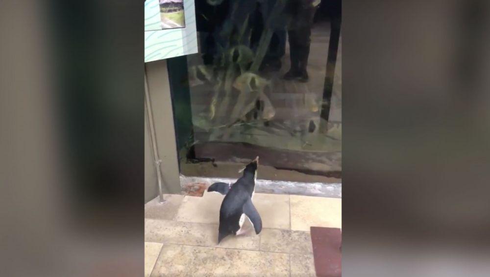 La visita de los pingüinos al acuario