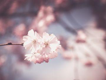 Primavera 2020: 5 curiosidades sobre la primavera y el equinoccio de primavera que te sorprenderán