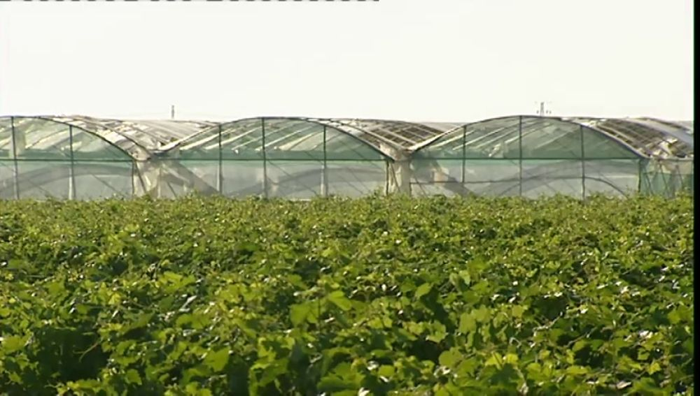 Plásticos de invernaderos convertidos en batas de hospital contra el coronavirus