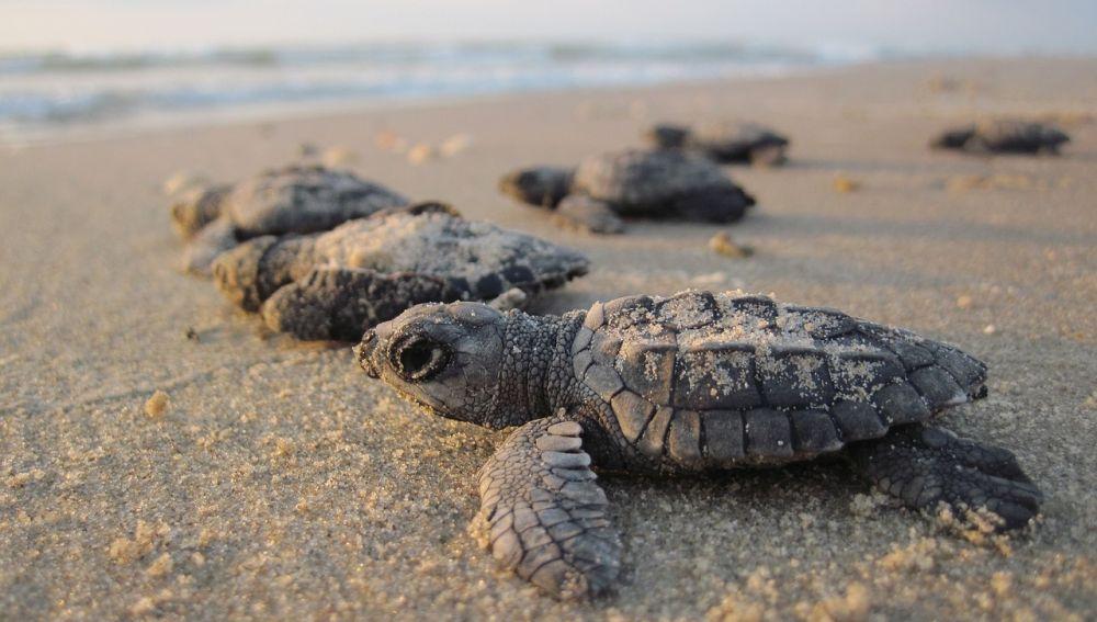 Tortugas en una playa
